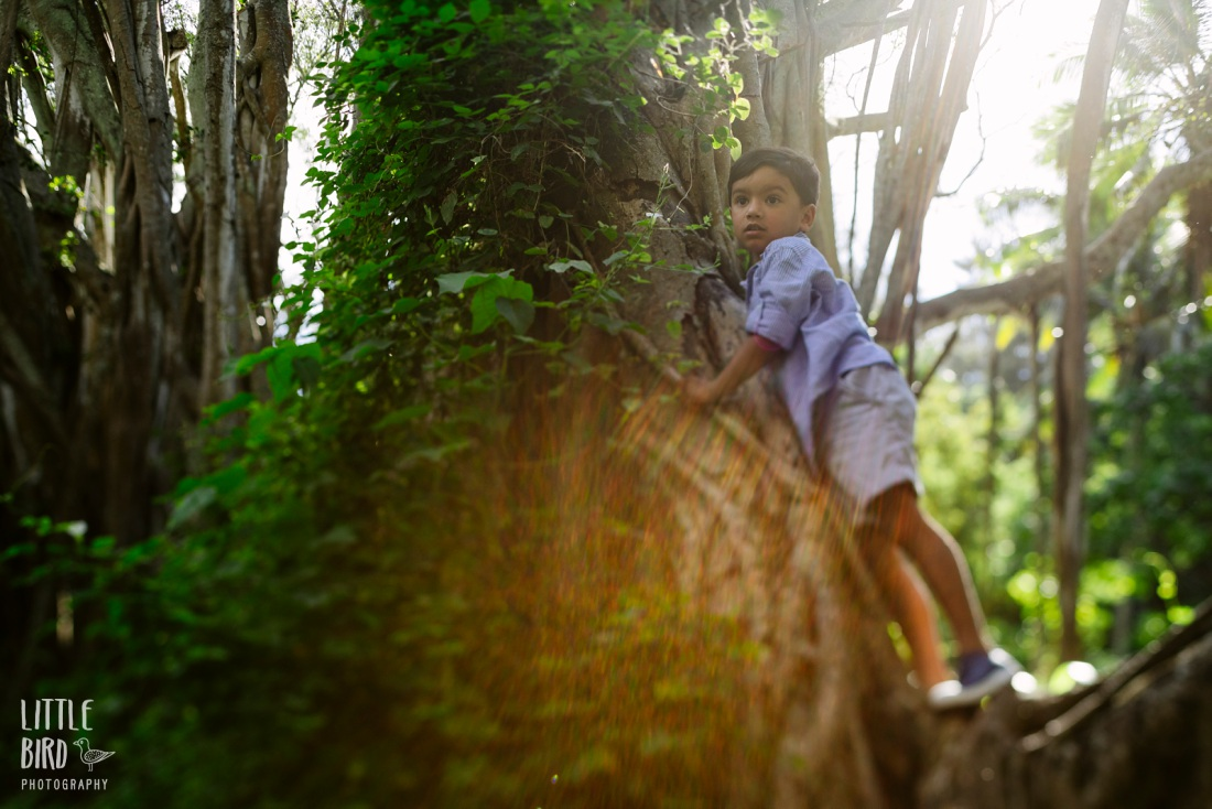 boy climbing a banyan tree in hawaii