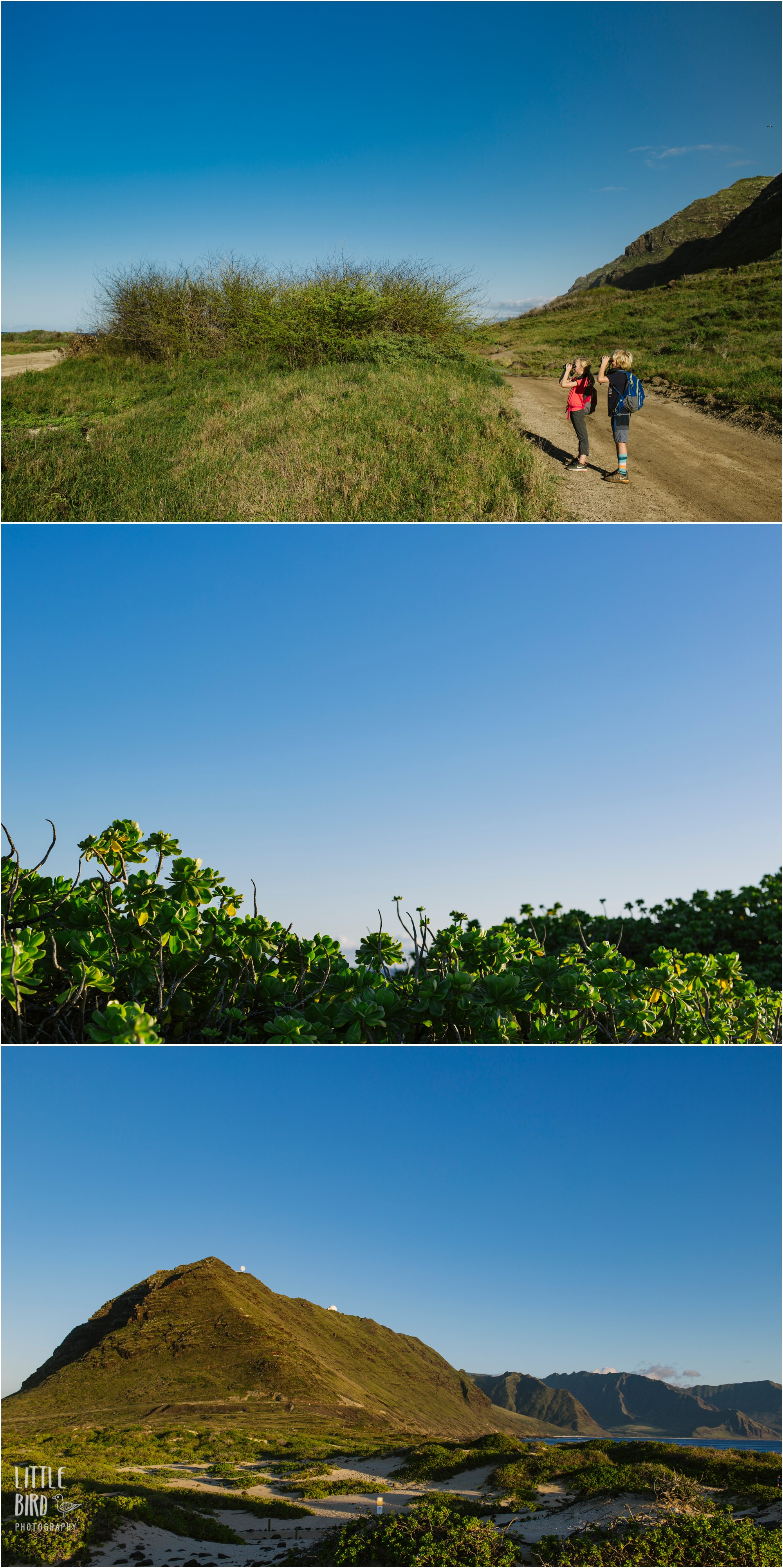 best oahu family hikes