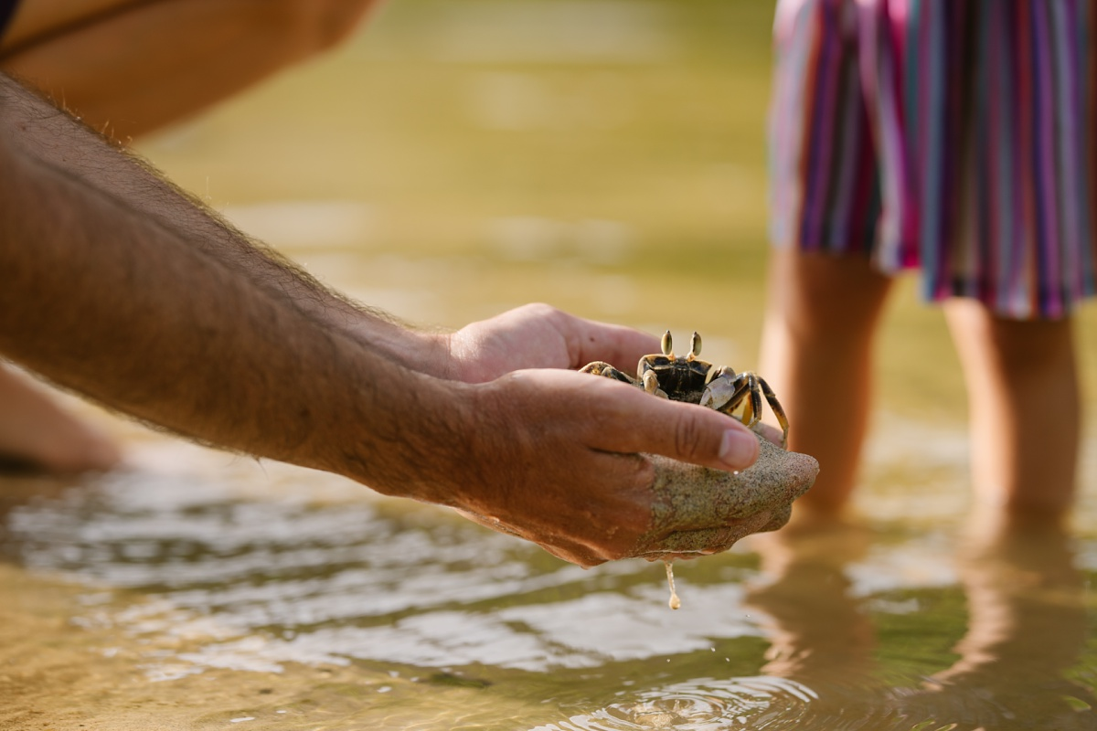 dad holding a crab in his hands
