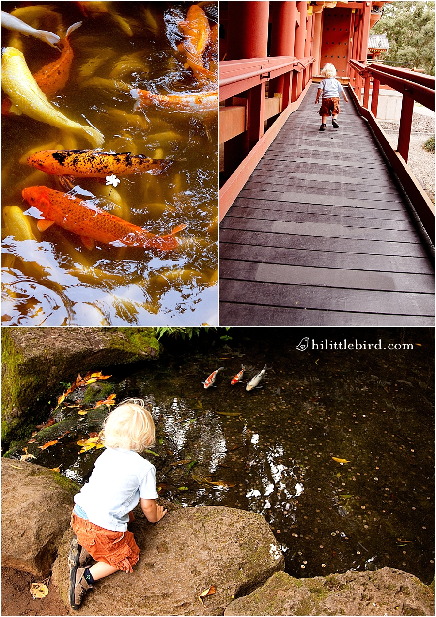 Byodo-in kids photography oahu