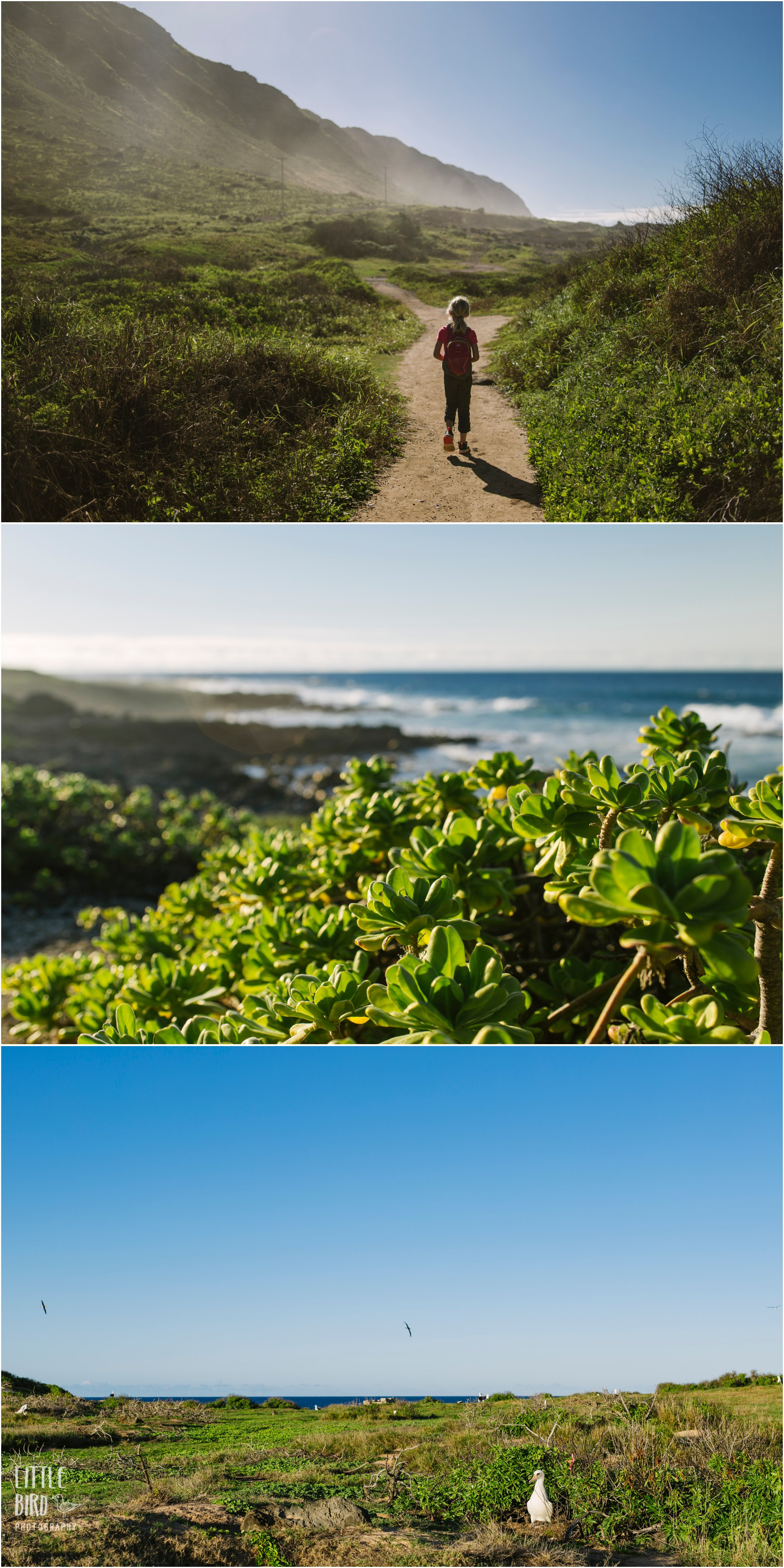 best oahu family hike