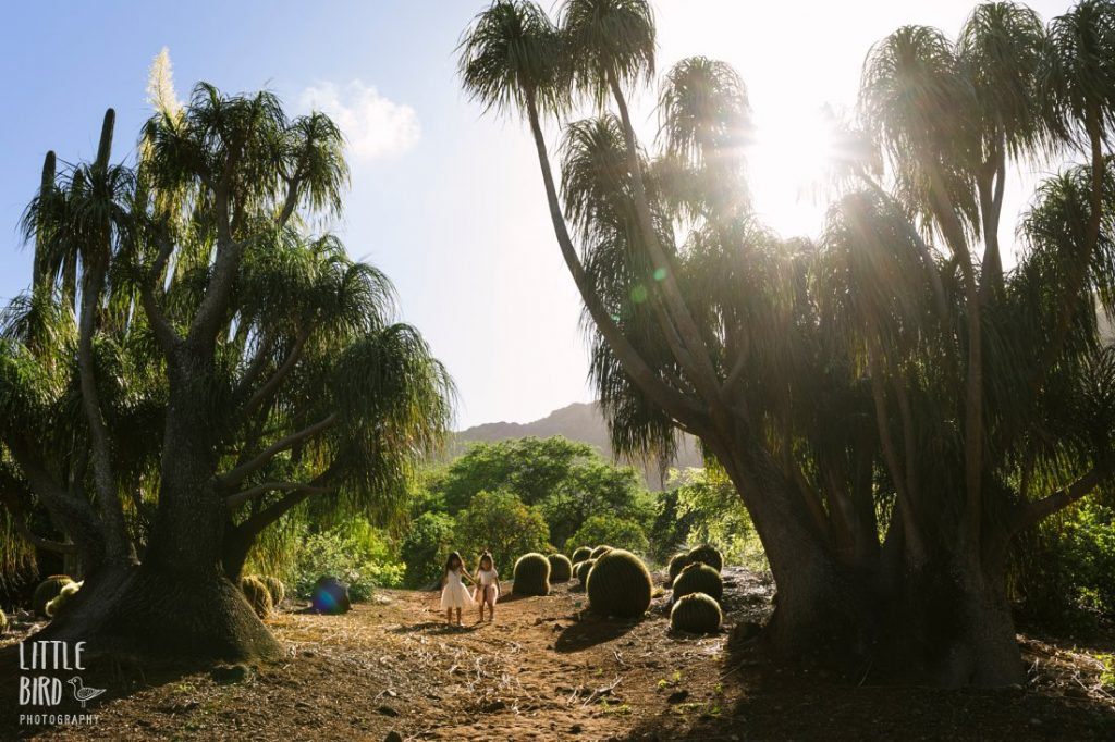 hawaii portrait photography at koko crater botanical garden